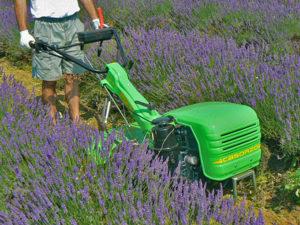Motocoltivatori Casorzo Macchine Agricole S.r.l.